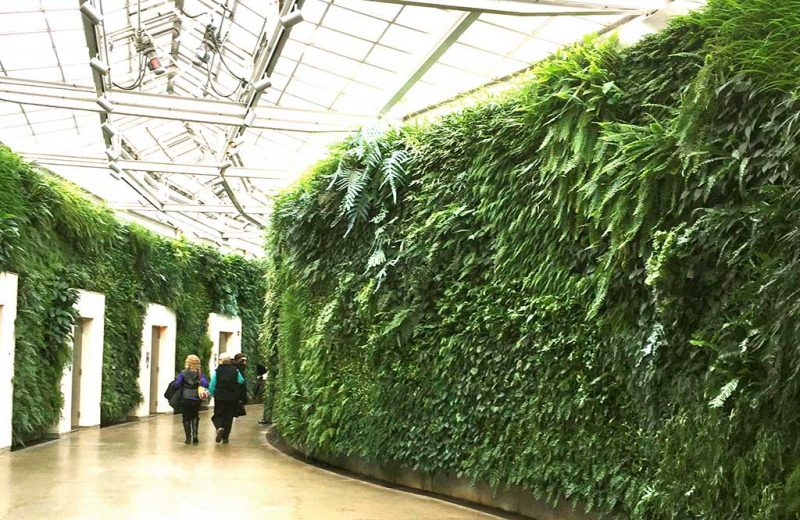 Green wall at Longwood Gardens